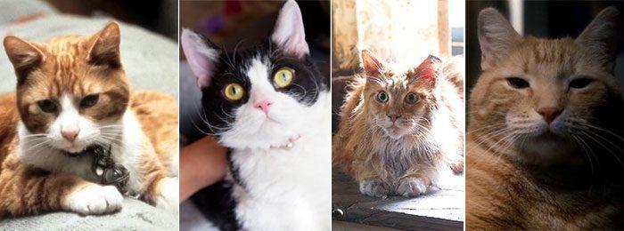 Кошачьи звезды кино