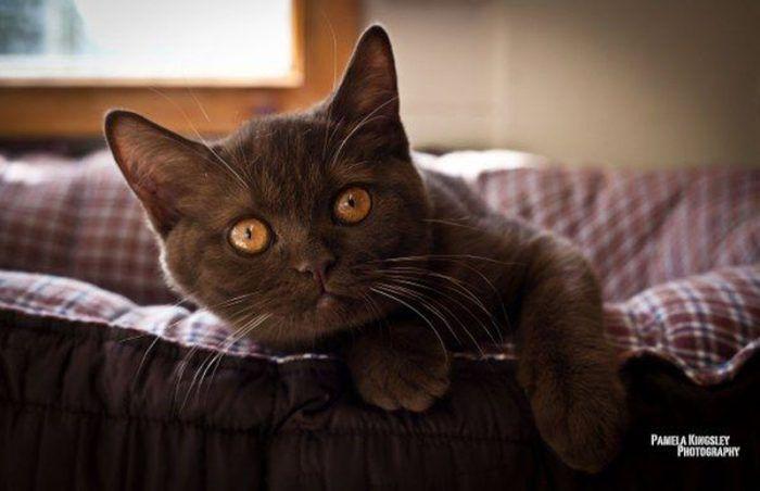 Шоколадный с яркими глазами