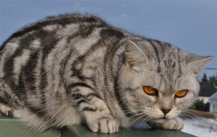 Котик злится