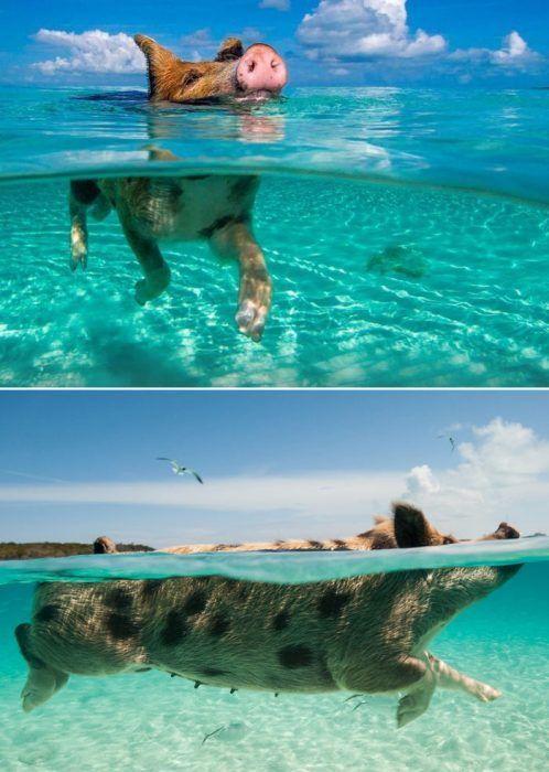Любители плаванья