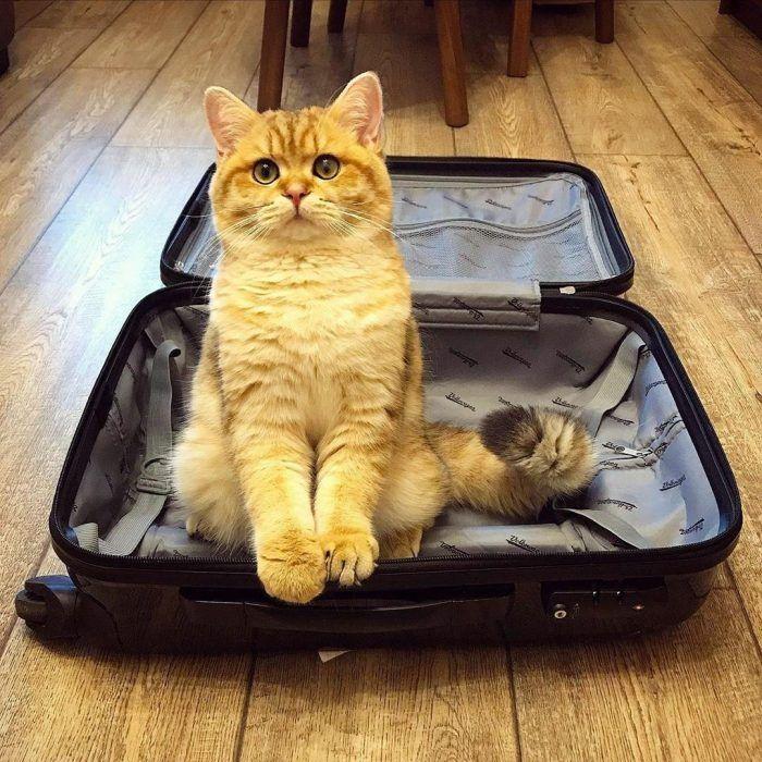 Я не багаж