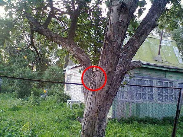 Мордочка в дереве