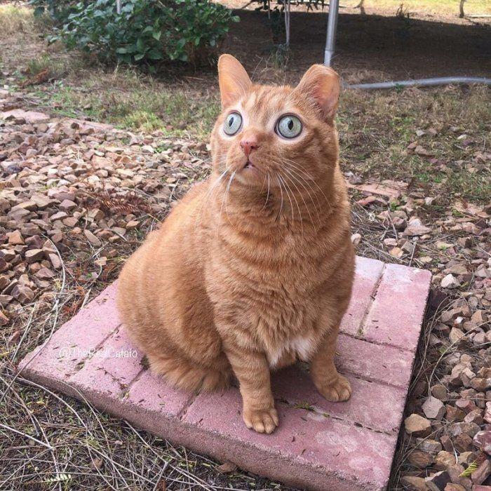 Котик Потейто
