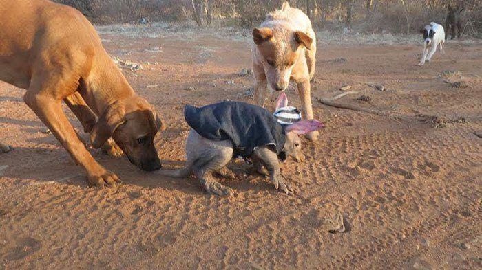 Собачки и приемыш