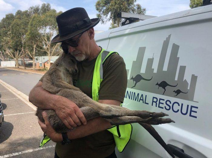 Помощь пострадавшему животному