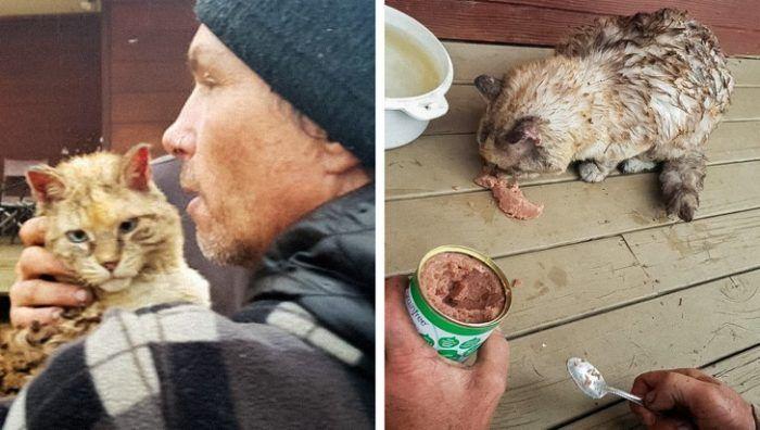 Спасение домашних животных