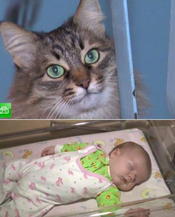 Кошечка и ее спасенный малыш