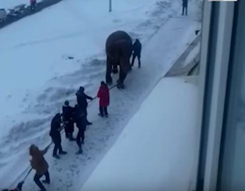 Ведение слона