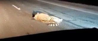 Сбитый тигр