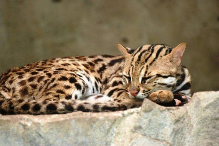 Спит на камне