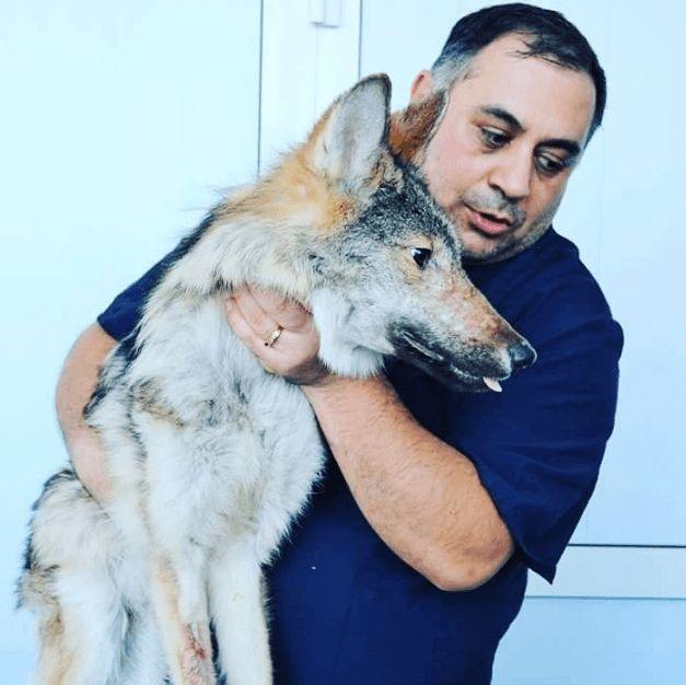 Волк пациент