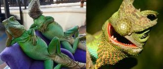 Необычные рептилии