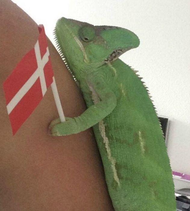 Хамелеон с флагом