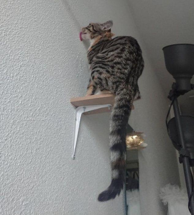 Кот лижет стену