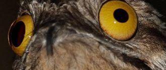 Взгляд дьявола