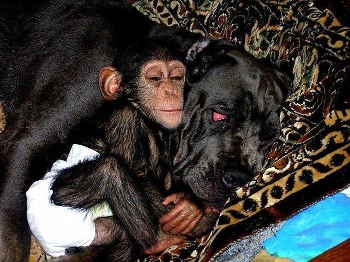 Мама для обезьянки