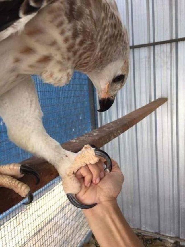 Птичка жмет руку