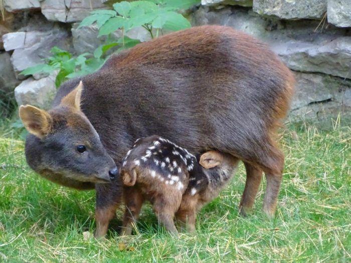 Мама и дитеныш