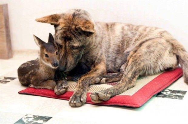 Собачка и косуля