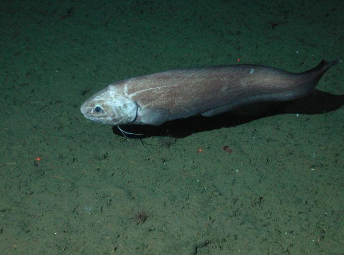 Рыб на дне