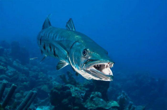 Большая рыбеха