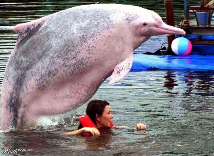Жирный дельфин