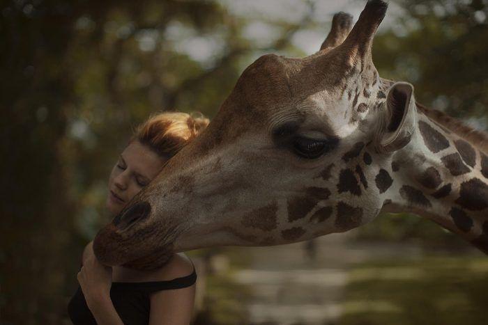 Жираф и модель