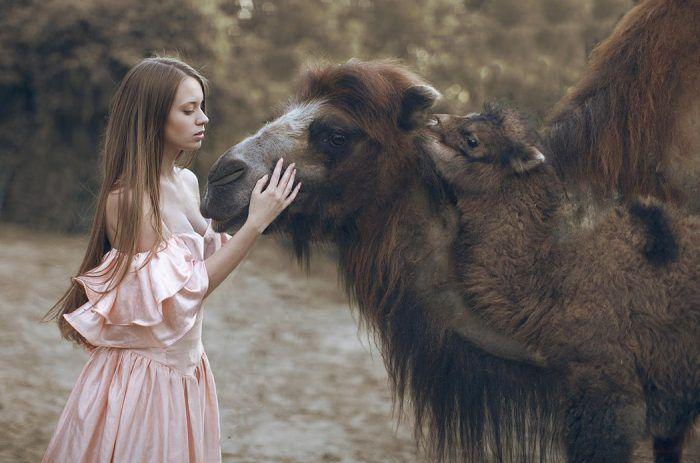 Верблюд с моделью