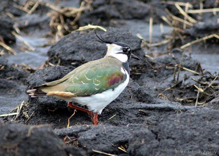 Птица на земле