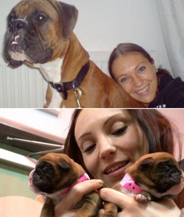 Собака и ее клоны