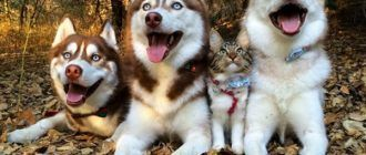 Кошка и ее друзья