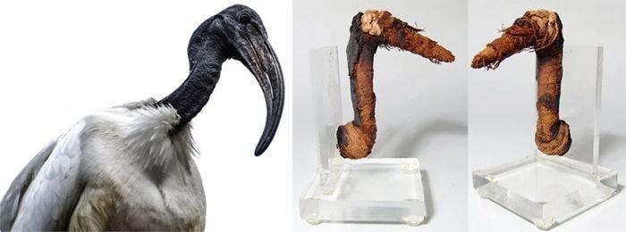 Мумии и птица