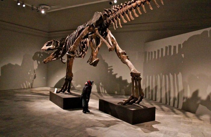 Ребенок и Кархародонтозавр