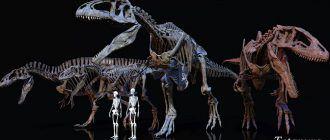 Люди по сравнению с динозаврами