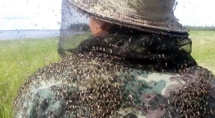 Скрывается от комаров