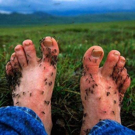 Комары на ногах