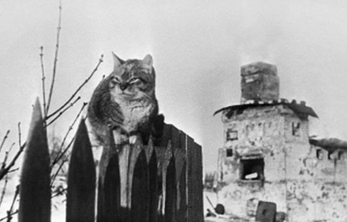 Кошка во время войны