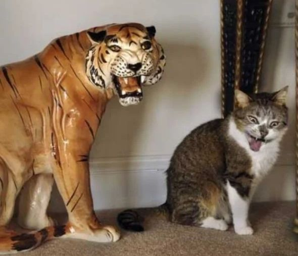 Тигр и котенок