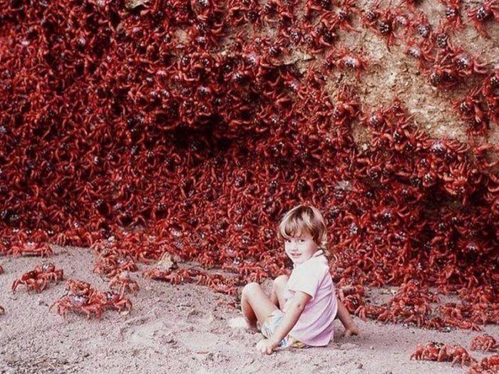 Ребенок и море крабов