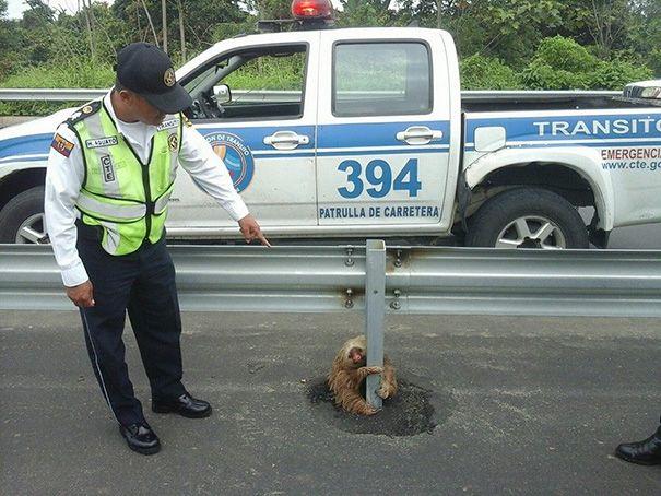 Полицейский и ленивец