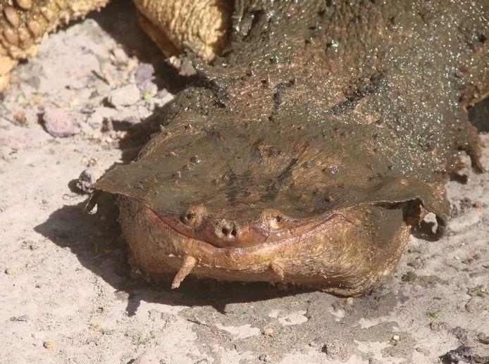 Черепаха довольна