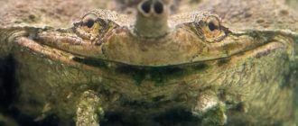 Черепаха кайфует