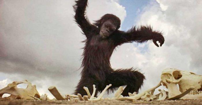 обезьян на острове