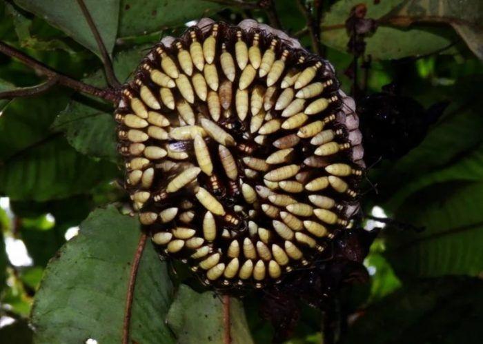 Цветок из ос