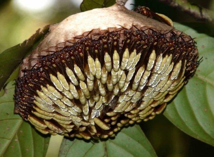 Страшный и опасный цветок из ос