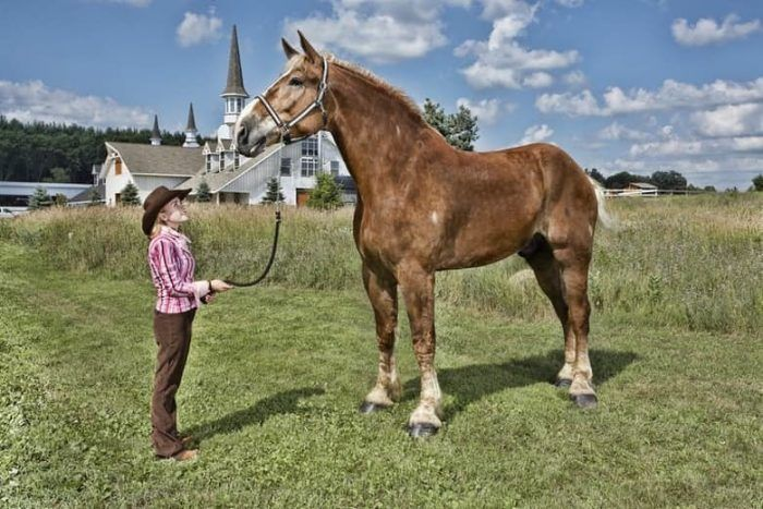 Гигантский конь