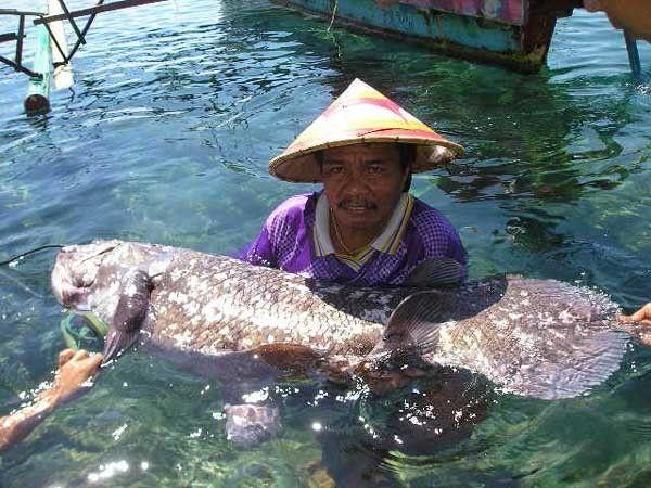 Выловленная рыбка