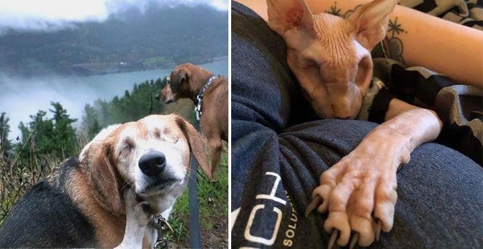 Слепые обака и кошка