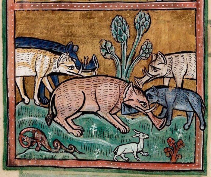 Табун слонов как волчья стая