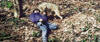 Ясон и волк